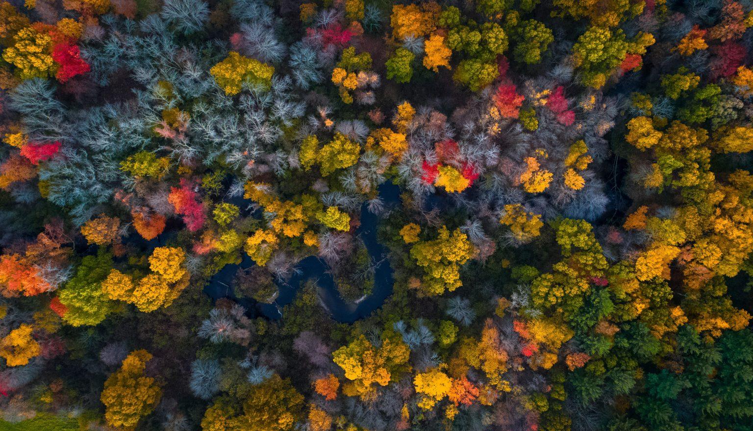 Aufnahme eines Waldes mit vielen Farben von oben